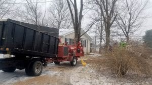 Tree Removal Lexington
