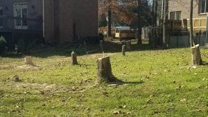 Tree Removal Lexington
